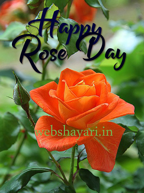 happy world rose day