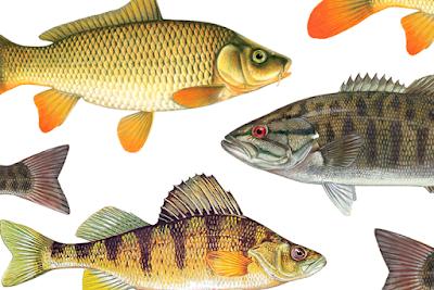 ikan air tawar makanan untuk ibu mengandung