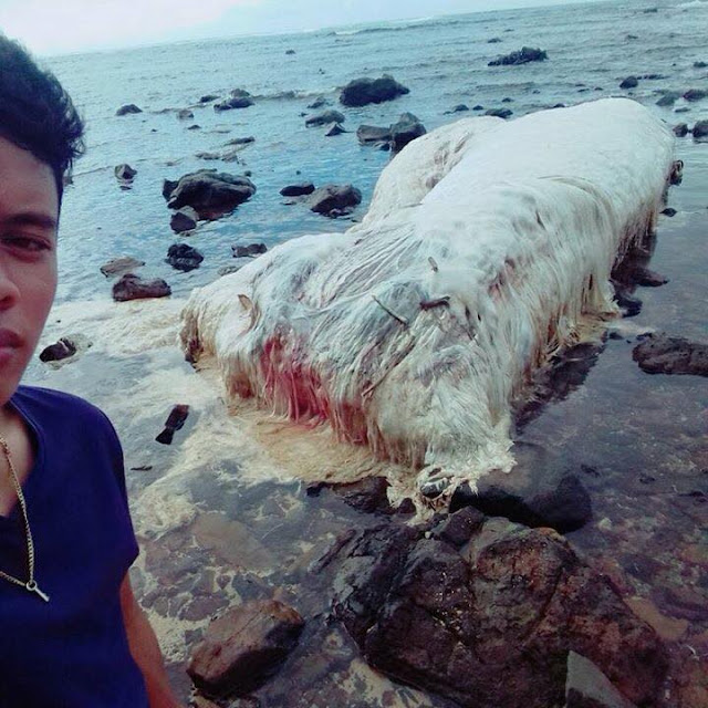 MUST SEE: This Extraordinary And Frightening Hairy Creature Was Found Dead Along The Coast Of Dinagat Island!
