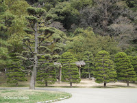 Cloud-pruned pines, Tokushima, Japan