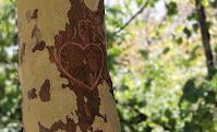 Le iniziali di due innamorati intagliate nel tronco di un albero