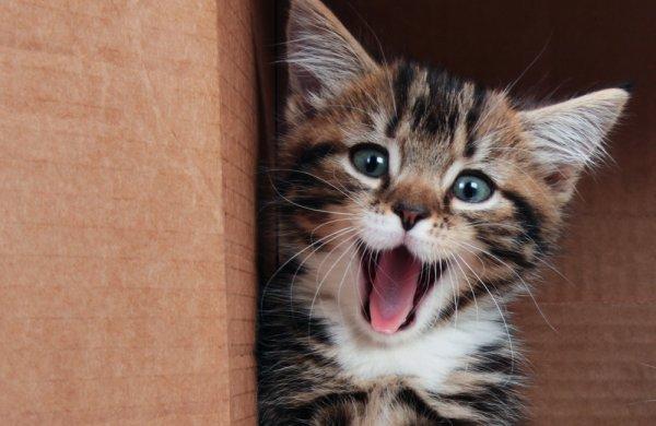 Gambar kucing lucu dan imut banget