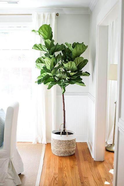 Indoor Plant Watering