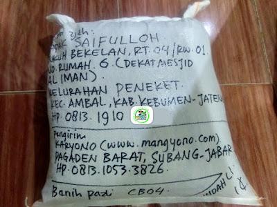 Benih untuk kirim ke   H. SURYADI Karajang, Jabar.   (Setelah di Packing).