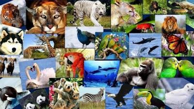 Importancia de los Animales