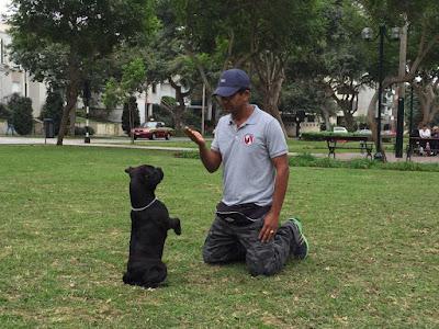 Adiestramiento Canino Miraflores