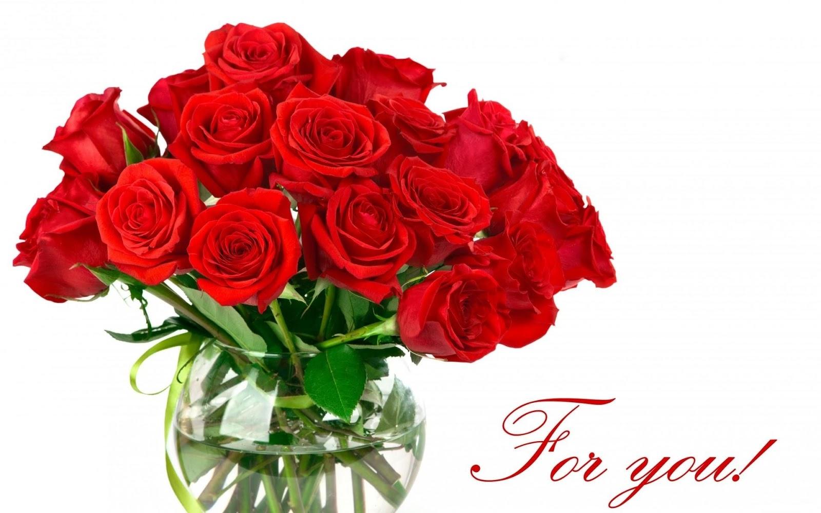 Rose flower background image download