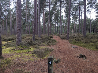 A path through trees in a Scottish forest with a walking route marker