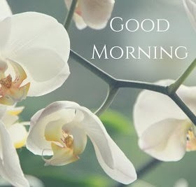 Good Morning Images and Wallpapers Free Download