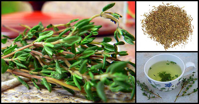 Reasons Why Thyme Is Good For The Body