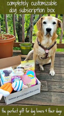 rescue mixed breed dog pooch perks subscription box