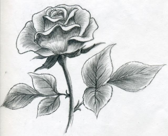 dessin d'une rose