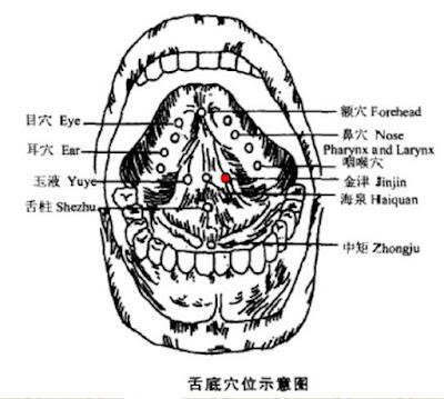 金津穴位 | 金津穴痛位置 - 穴道按摩經絡圖解 | Source:zhongyibaike.com