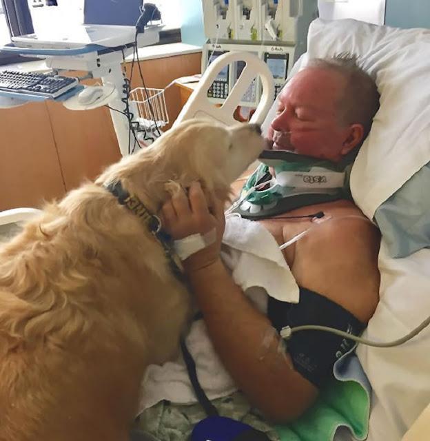 Собака спасла жизнь своему хозяину, пролежав на нем 24 часа в лютый мороз