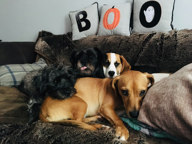 Boo dogs