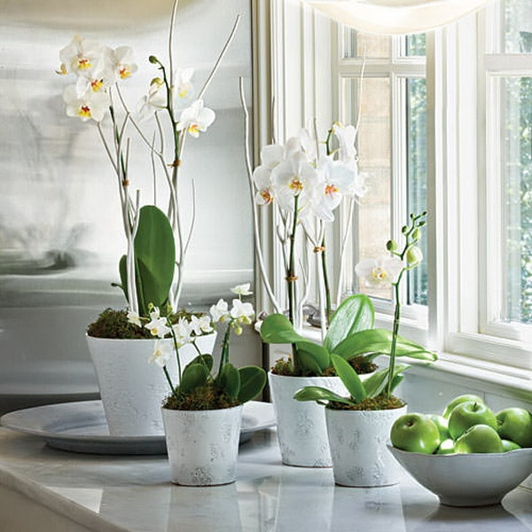 Decorate Your Interior With Orchids 4