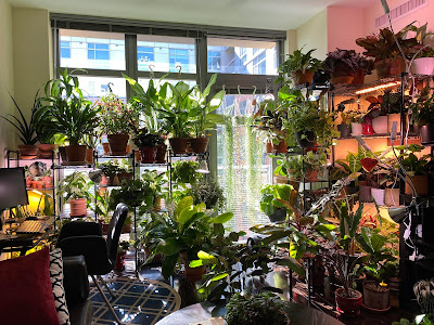 A room with large windows jammed pack with plants.