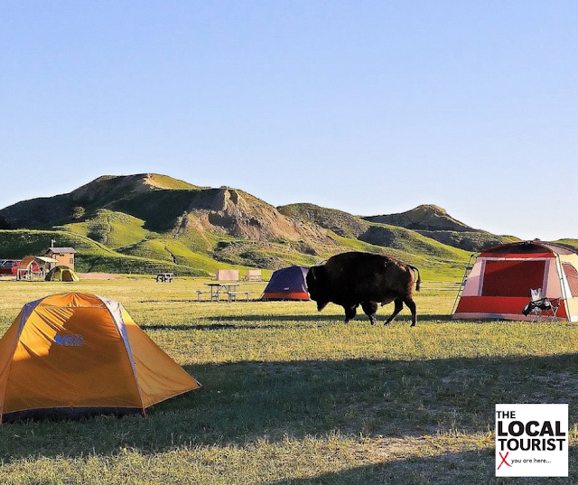 Camping with the bison at Sage Creek Campground in Two Lane Gems by Theresa Goodrich