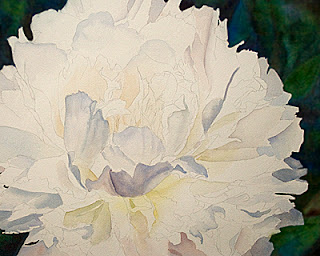 White Peony Watercolor Painting – update 4