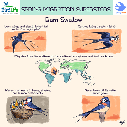 Green Humour: Spring Migration Superstars- Comics for ...
