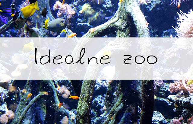Idealne zoo