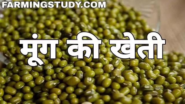 मूंग की खेती कैसे करें पूरी जानकारी हिंदी में, moong ki kheti kaise kare?, mung ki kheti, moong ki daal, बसंत एवं ग्रीष्मकालीन में मूंग की खेती, mung,