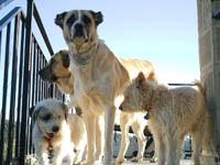 Adopción de animales