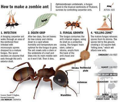 Películas de insectos