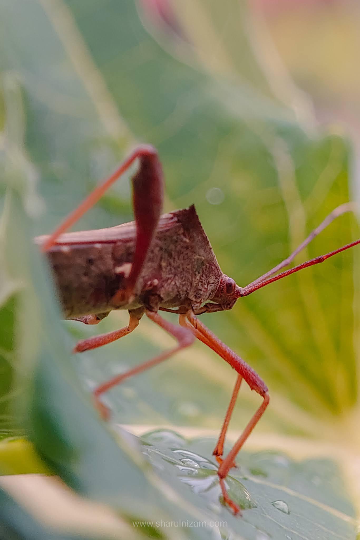 Shield Bug / Stinky Bug / Kesing