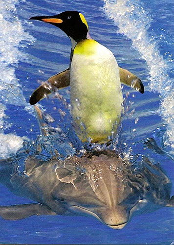 penguin surfing on a dolphin