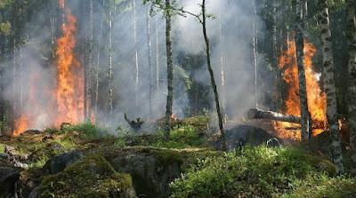 Tipe kebaaran hutan yang terjadi di Indonesia memberikan dampak yang berkepanjangan akibat dari api yang melahap vegetasi. Tipe ini dapat dibedakan menjadi tiga bagian yakni tipe kebakaran bawah, permukaan, dan tajuk. Kebakaran awalnya terjadi oleh adanya reaksi dari segitiga api. Tipe kebakaran bawah merupakan situasi dimana api membakar material organik seperti gambut dan perakaran tumbuhan di bawah permukaan tanah. Tipe kebakaran permukaan merupakan situasi dimana api membakar material organik seperti serasah dan tumbuhan rendah. Tipe kebakaran tajuk merupakan situasi dimana api membakar tajuk pohon ke tajuk pohon lainnya yang memiliki jarak dekat akibat menjalarnya api dari bawah karena adanya bahan bakar vertikal.