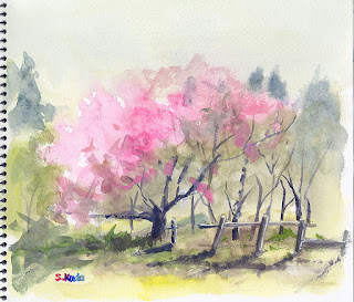 八重桜のラフスケッチ。水彩でざっくり描きました。