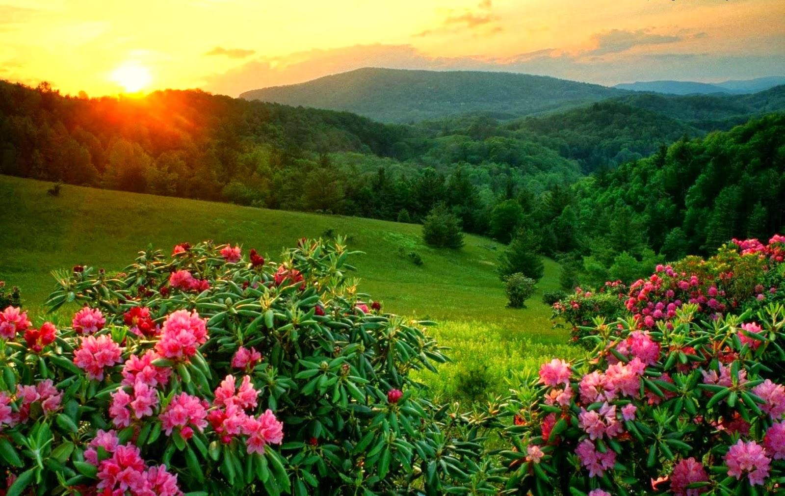 Keindahan Alam Memukau Pandangan Mendamaikan Hati  Relaks