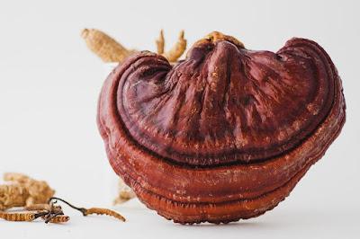 Reishi Mushroom Training