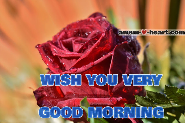 Good morning images with red rose flowers