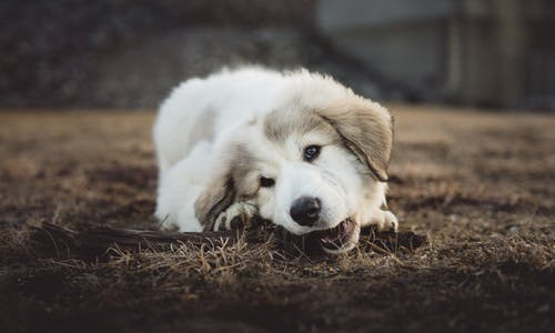 top best 150  dog names D E F star word list