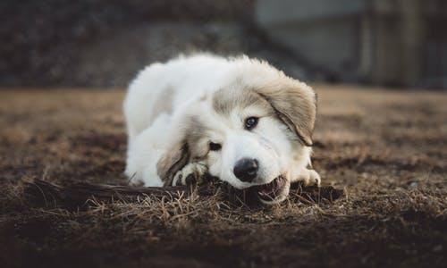top 51  best C-word start dogs names list