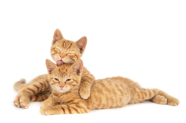 How am i able to improve my cat's health and welfare?