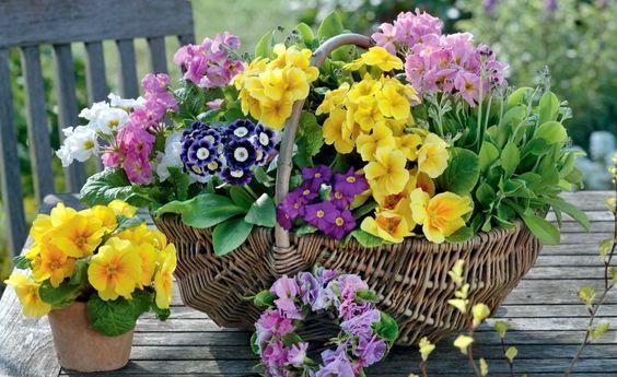 Τα 6 πιο Ανοιξιάτικα λουλούδια για χρώμα στον Κήπο ή το Μπαλκόνι σας