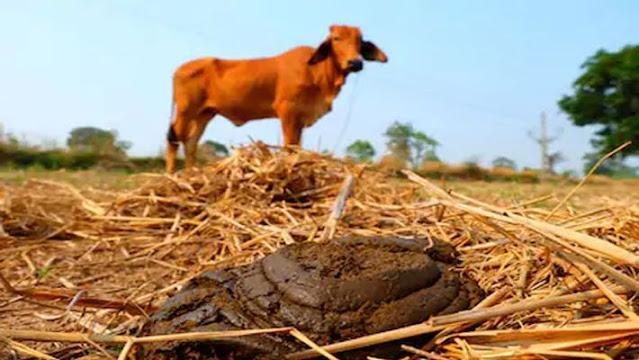 దేశవాళీ గోమయముతో ఆరోగ్యమును, ఆర్ధిక స్థిరత్వమును - Desavu Govu (Cow) Dung and its Healthy, Wealthy Benefits
