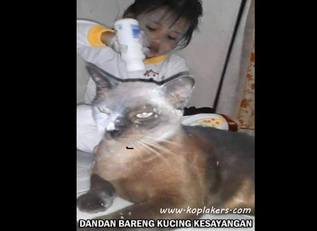100 Kumpulan DP BBM Gambar Meme Lucu Terbaru Asli Bikin Ketawa
