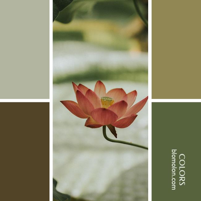 variedad_en_color_combinacion_12