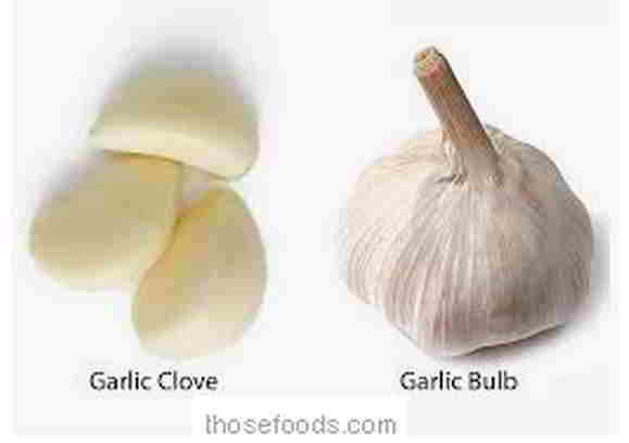 what is a clove of garlic