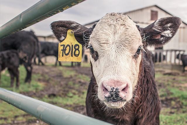 農牧業大升級就靠人工智慧-畜牧業篇
