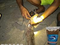 Umpan Ikan Lele Khusus Malam Hari