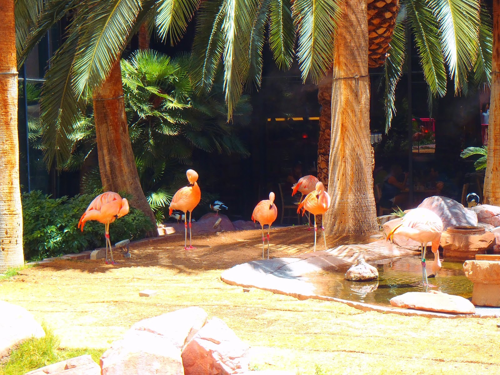 flamingos at the flamingo hotel and casino