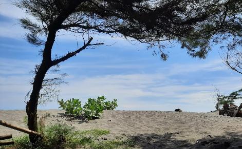 Wisata Pantai Depok Jogja