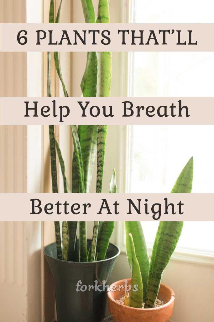 6 BEDROOM PLANTS THAT'LL DRASTICALLY IMPROVE YOUR HEALTH ...