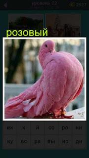 на парапете сидит розовый голубь 22 уровень 667 слов