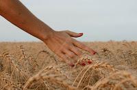 Wheat ripened - Photo by Paz Arando on Unsplash